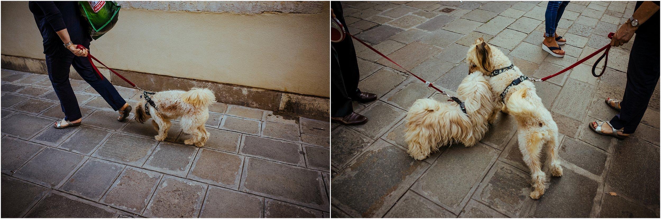 dogs in venice_0016.jpg