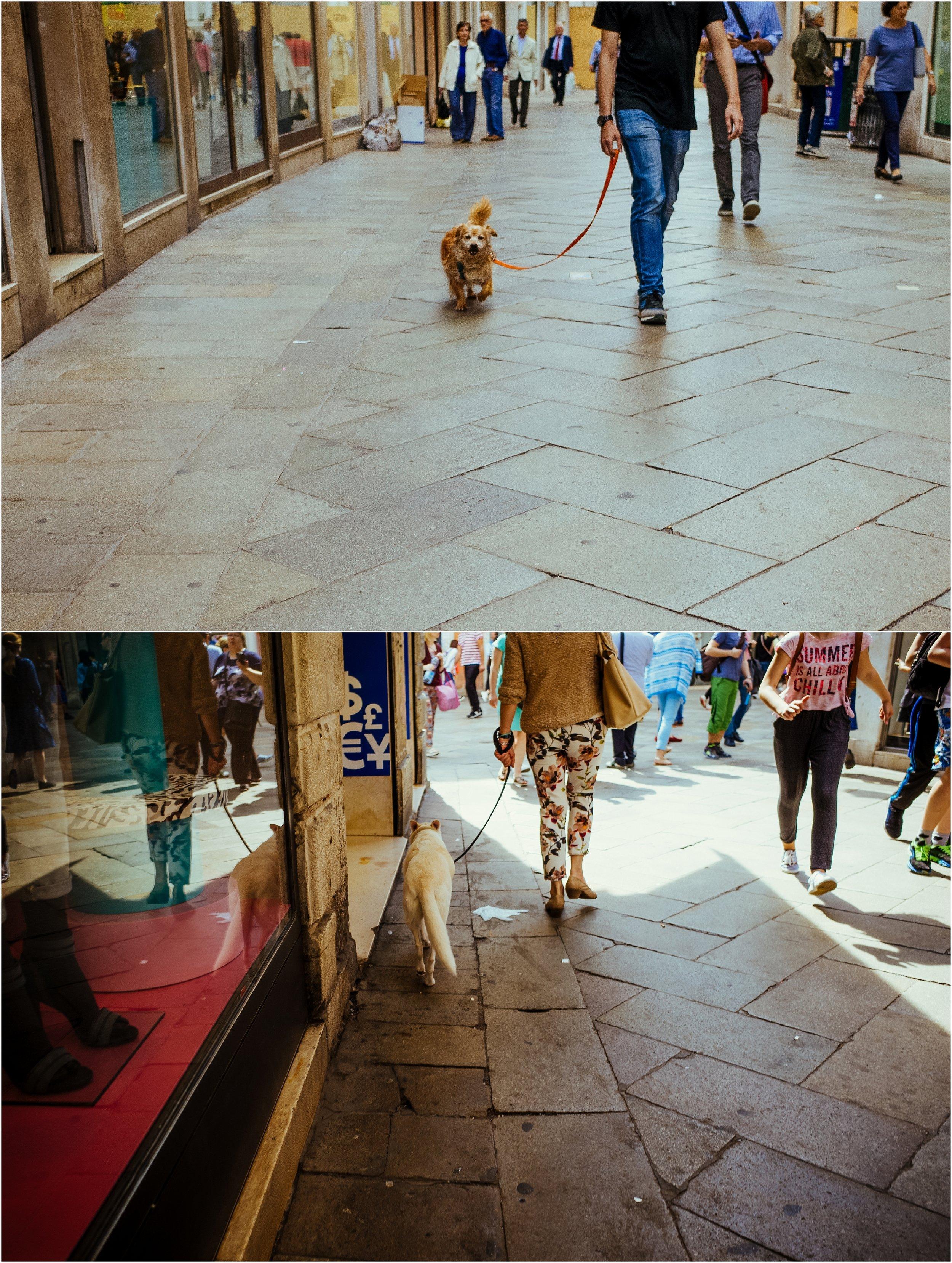 dogs in venice_0027.jpg