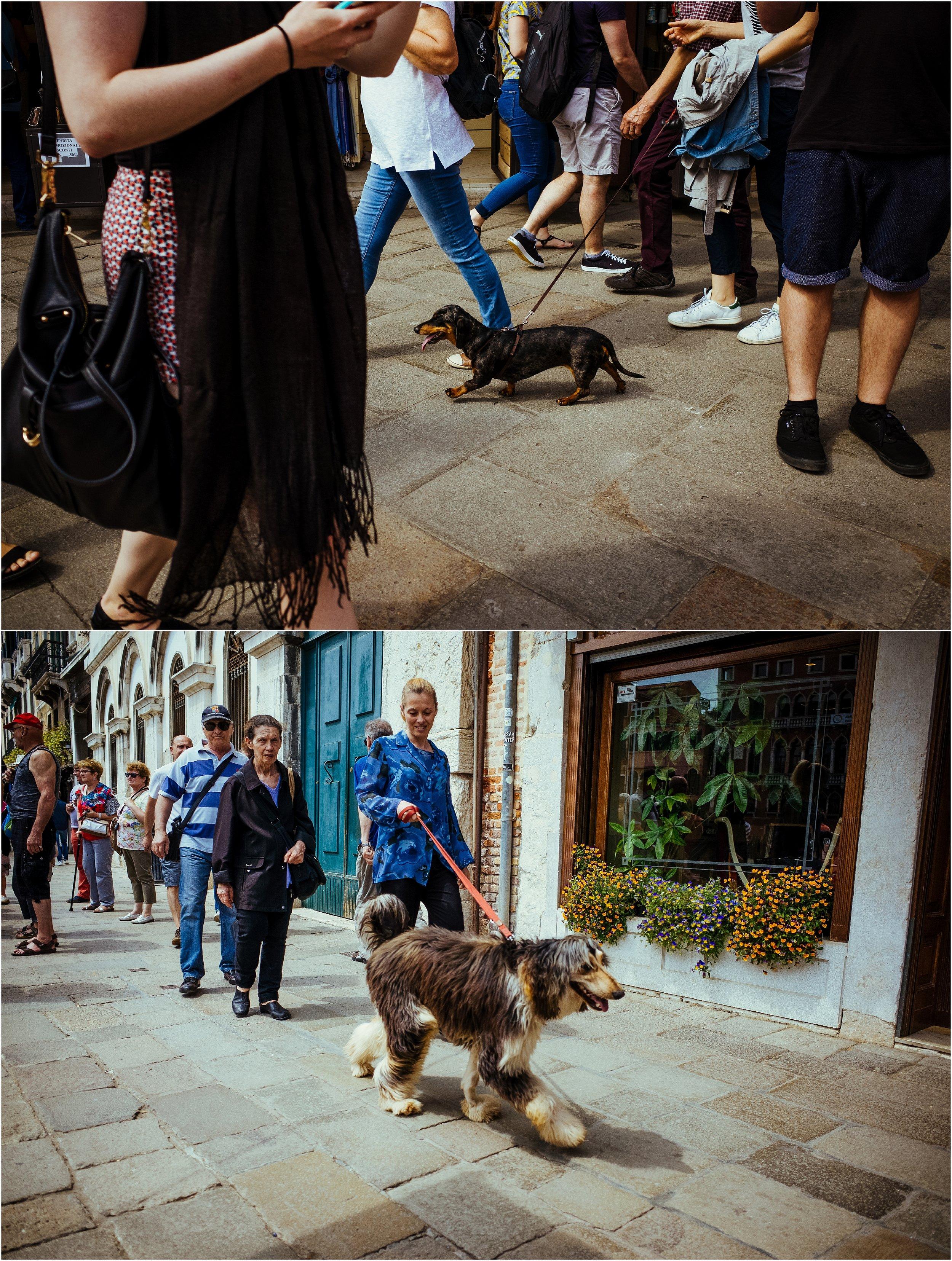 dogs in venice_0030.jpg