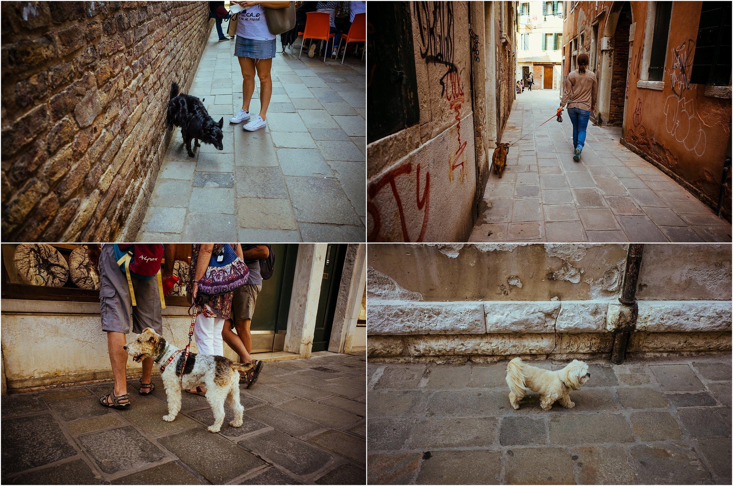 dogs in venice_0037.jpg