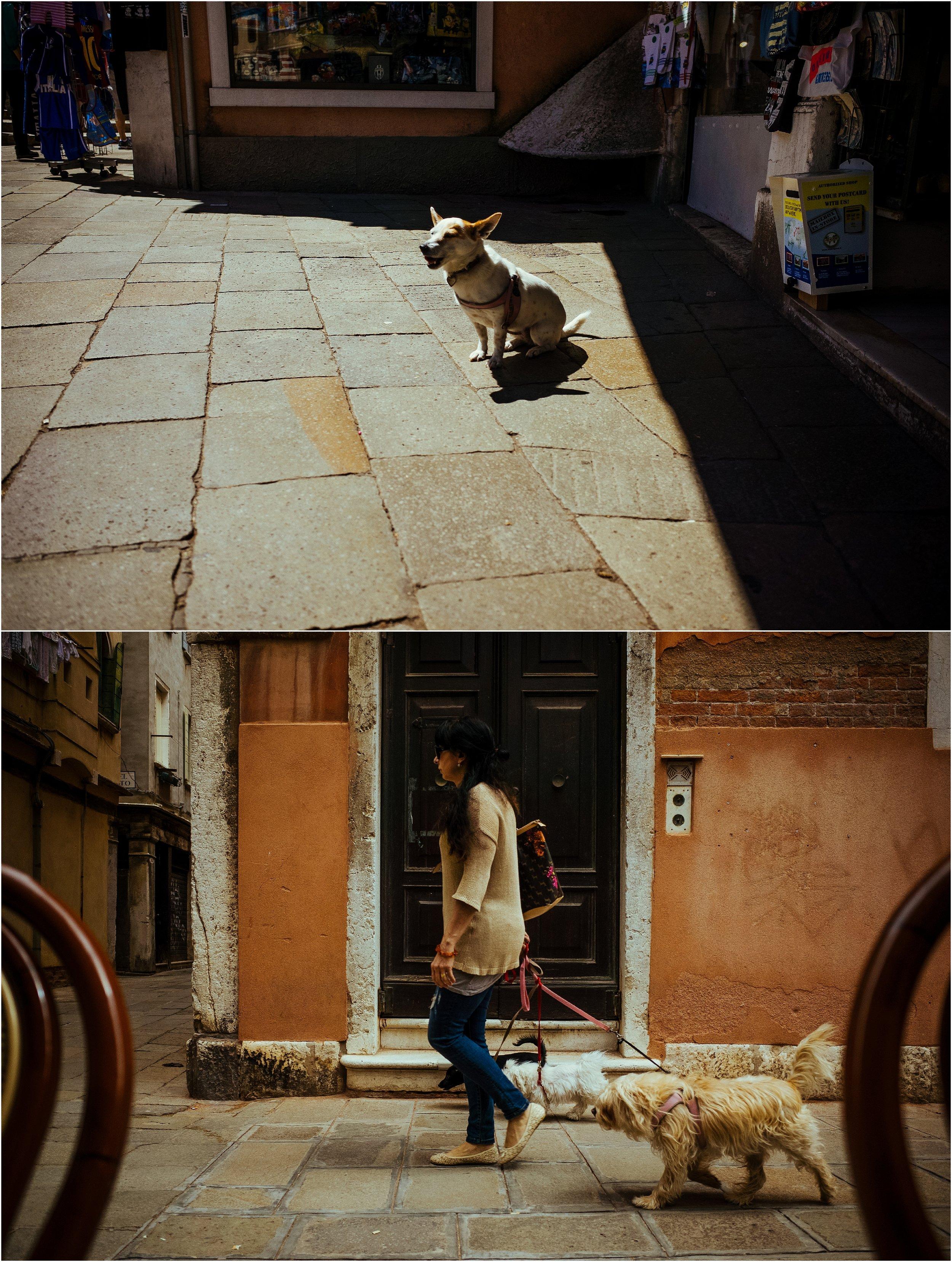 dogs in venice_0045.jpg
