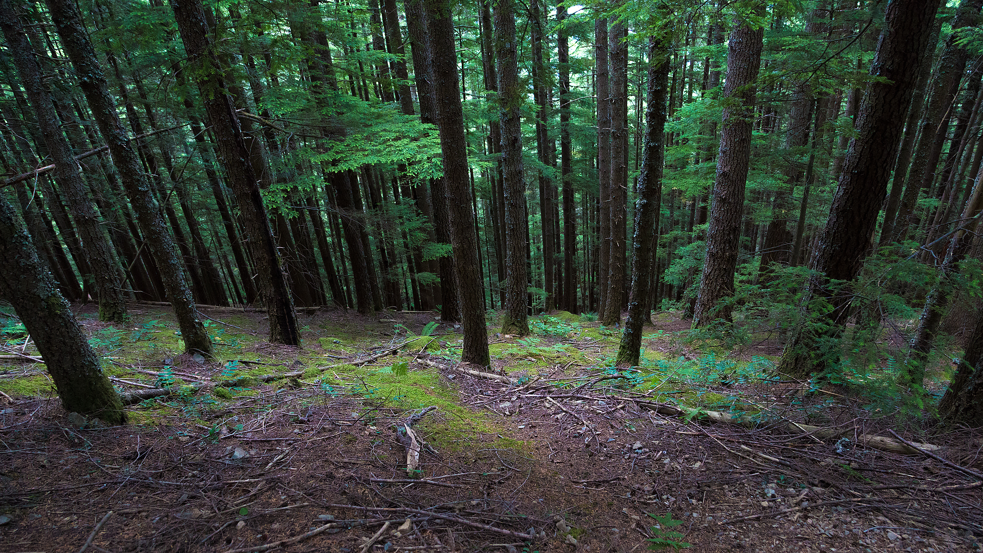 Forest on Mount Si near North Bend, WA.