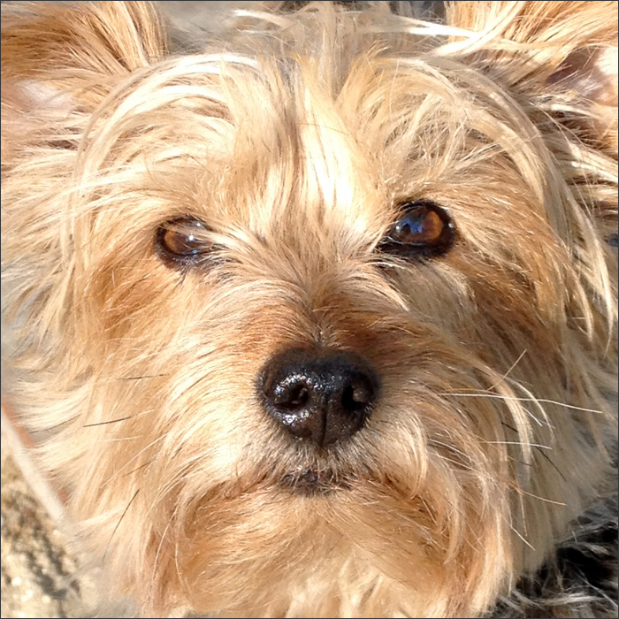 DOGS5415Suki.jpg