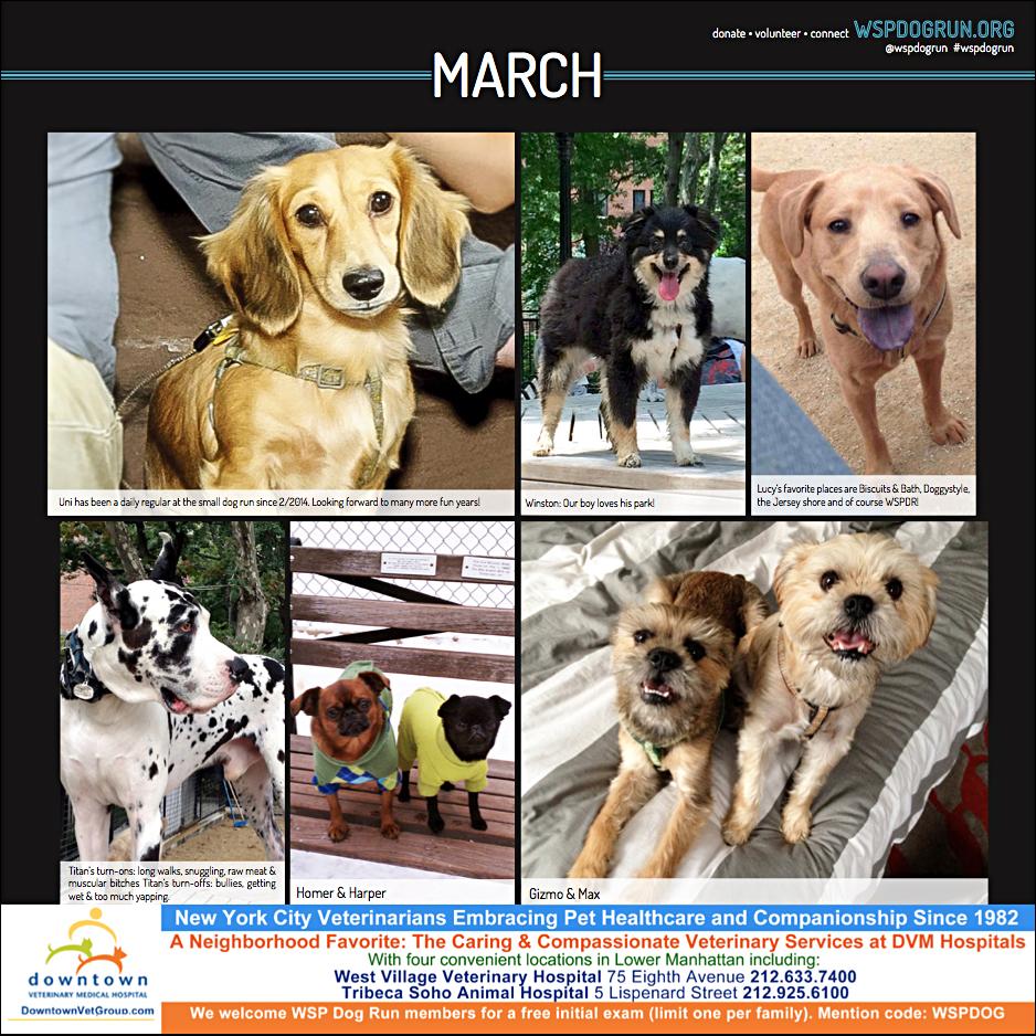 C March Dogs.jpg
