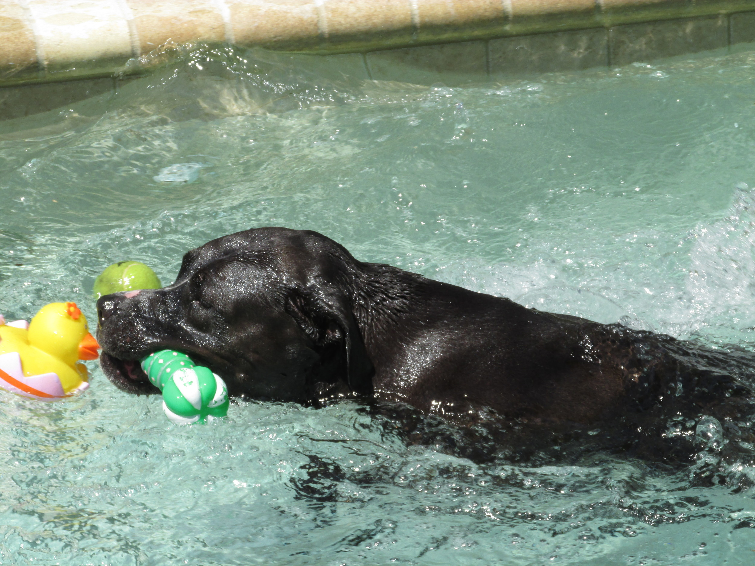 The swimming pool at Dogs & Cats Forever