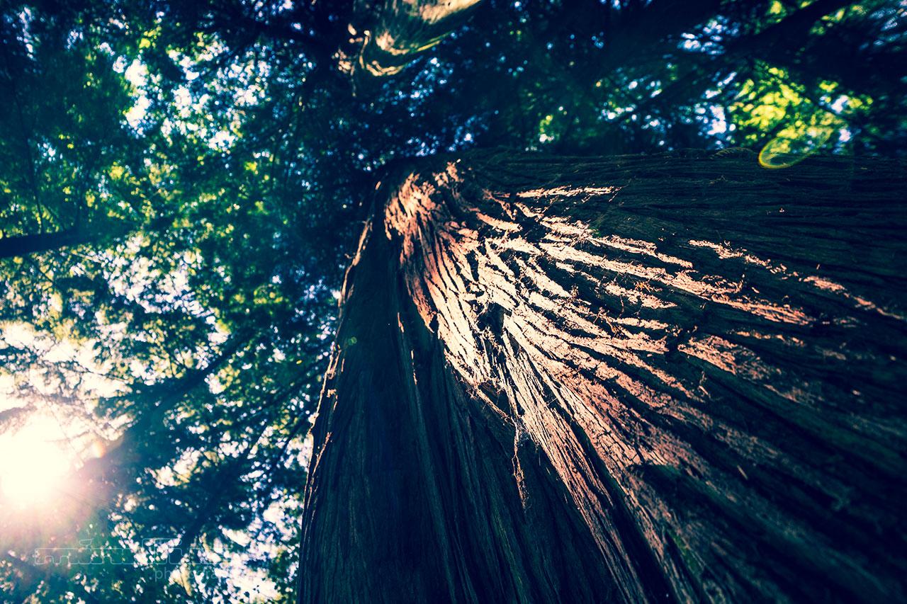 tree bark.jpg