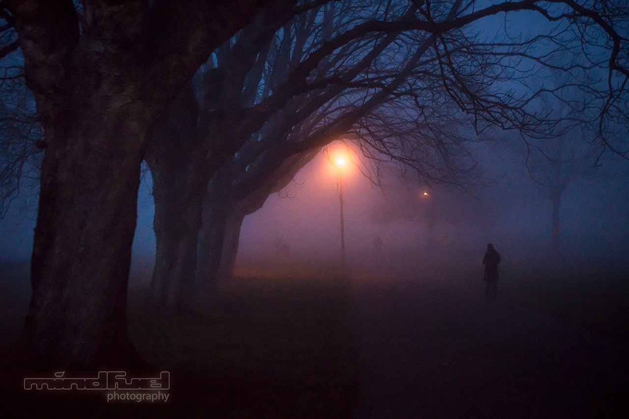 night fog.jpg