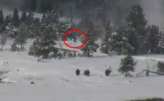 image from  http://www.krtv.com/story/28087433/bigfoot-family-spotted-on-yellowstone-webcam