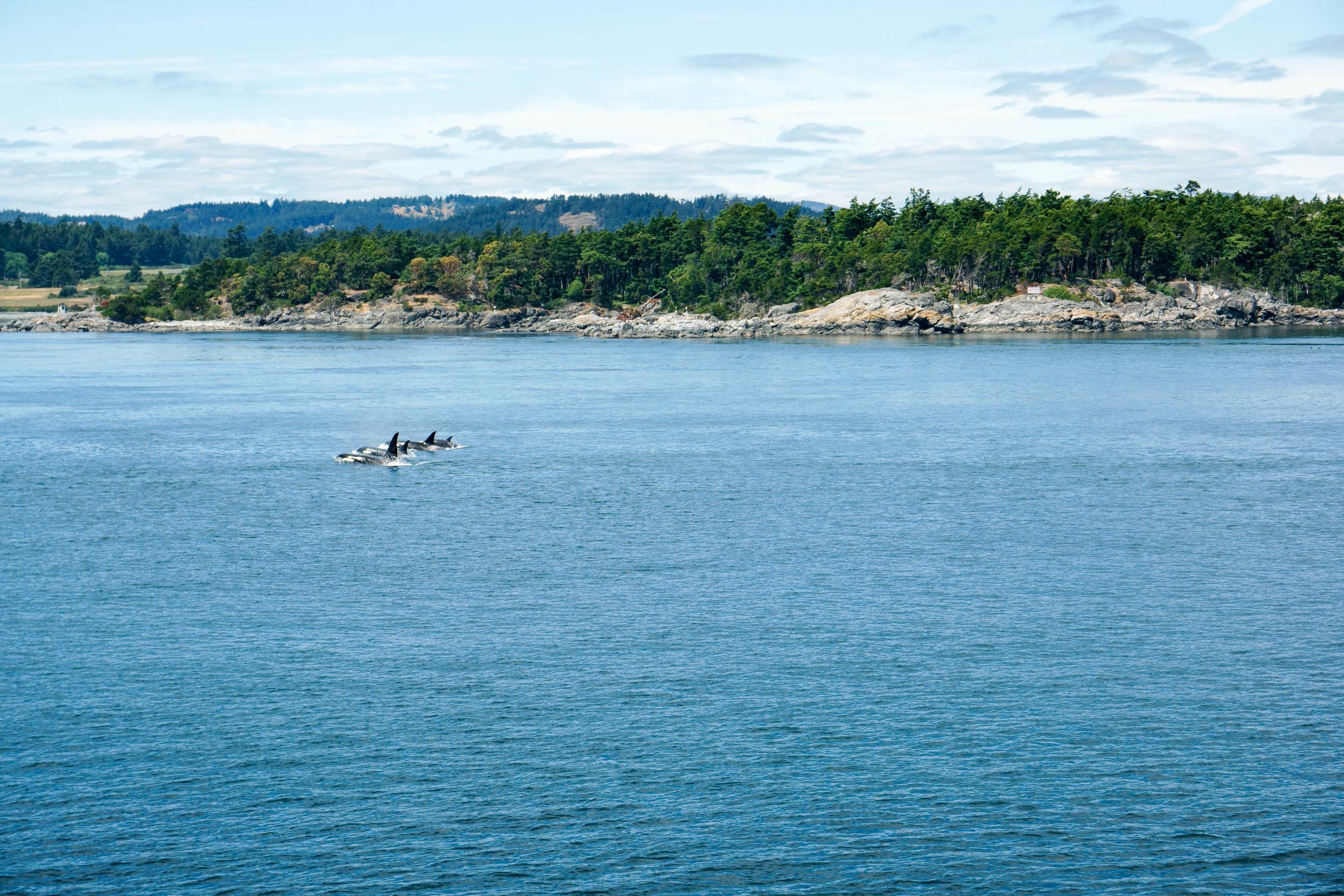 AlaskaAdventure-1.jpg