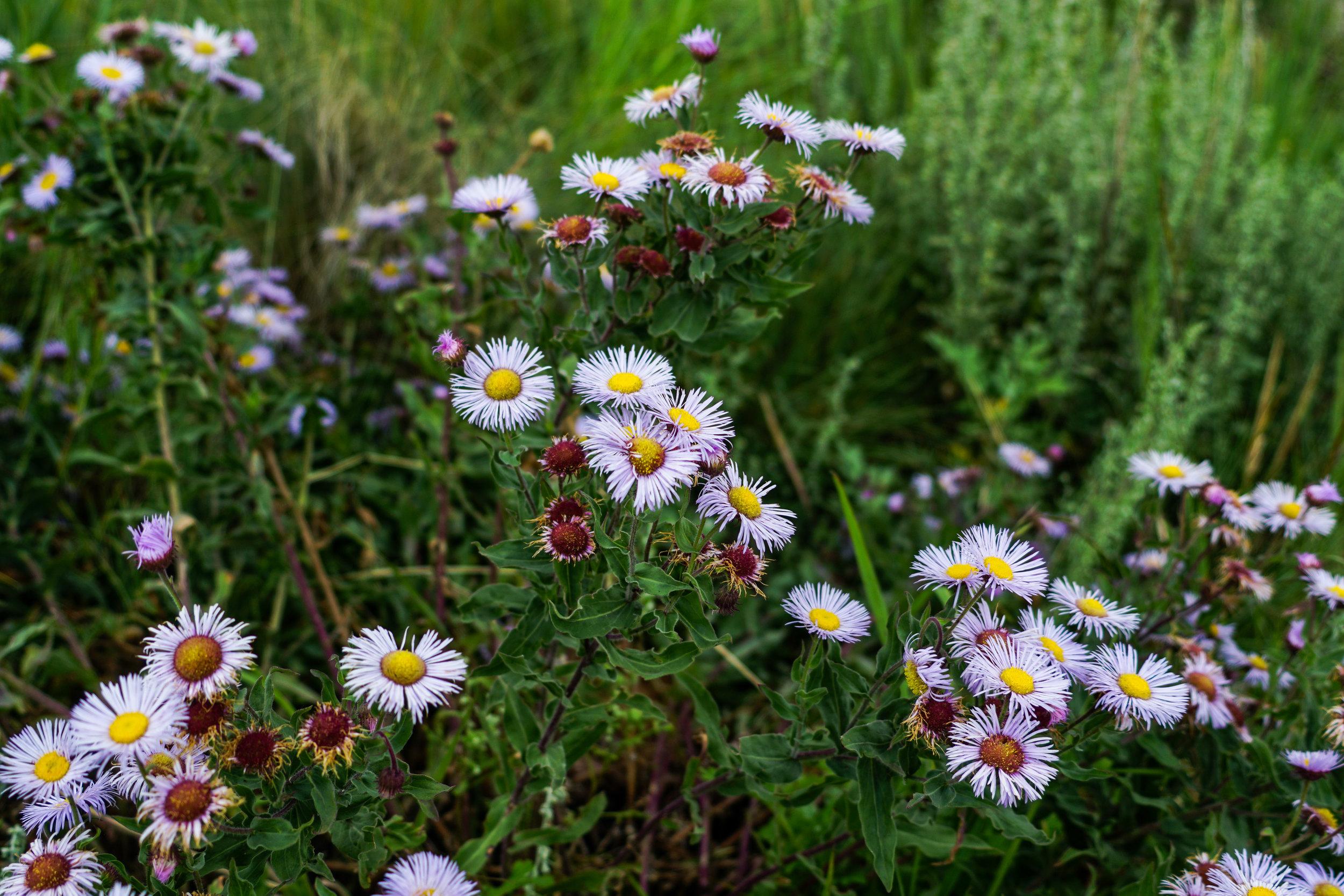 Photo Essay Ruidoso New Mexico Laura Lawson Visconti