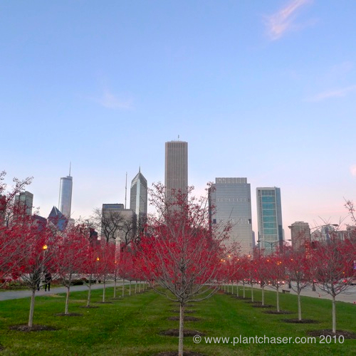 chicago-plants-4.jpg