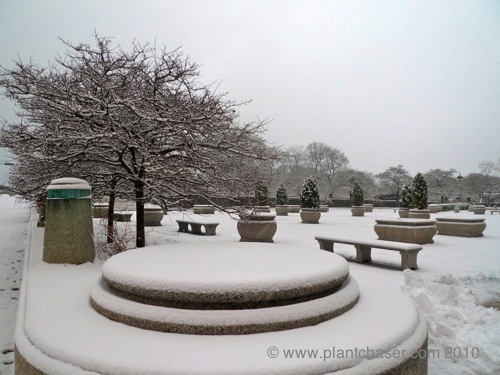 chicago-snow.jpg