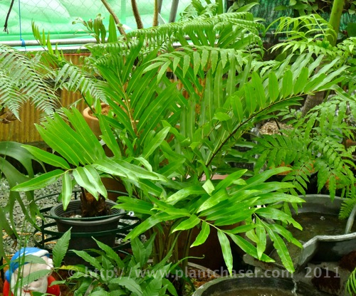 fern-species-noid-1.jpg