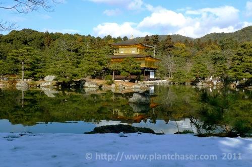 kyoto-kinkaku-ji-golden-pavillion-2.jpg