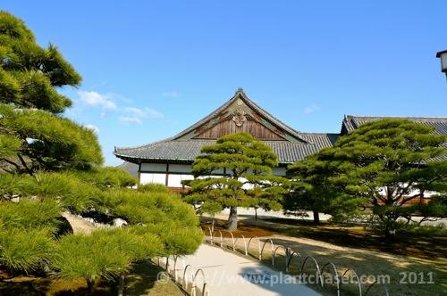 kyoto-nijo-ninomaru-1.jpg