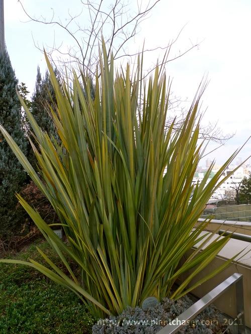 namba-parks-garden-phormium-tenax.jpg