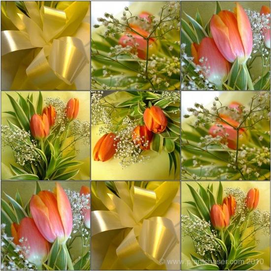 anniversary_tulips_mosaic.jpg