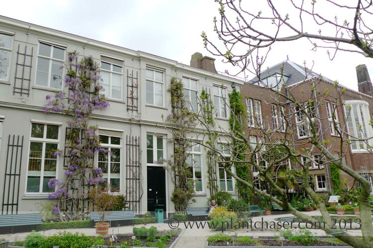hortus-botanicus-amsterdam-003.jpg