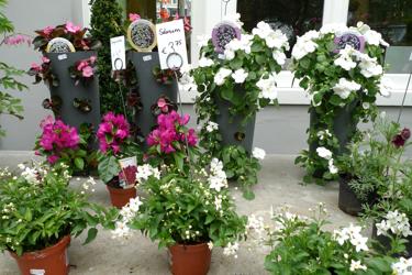 hortus-botanicus-amsterdam-store-solanum.jpg