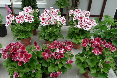hortus-botanicus-amsterdam-store.jpg