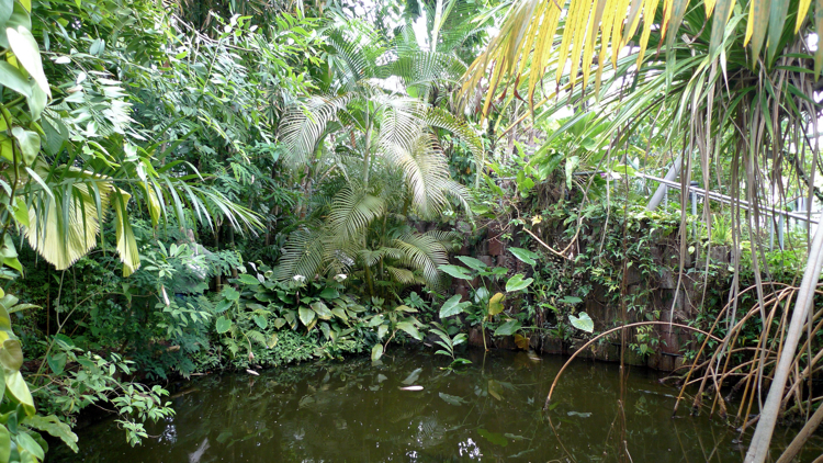Inside the Tropical Zone