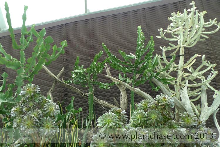 singapore-gardens-692.jpg