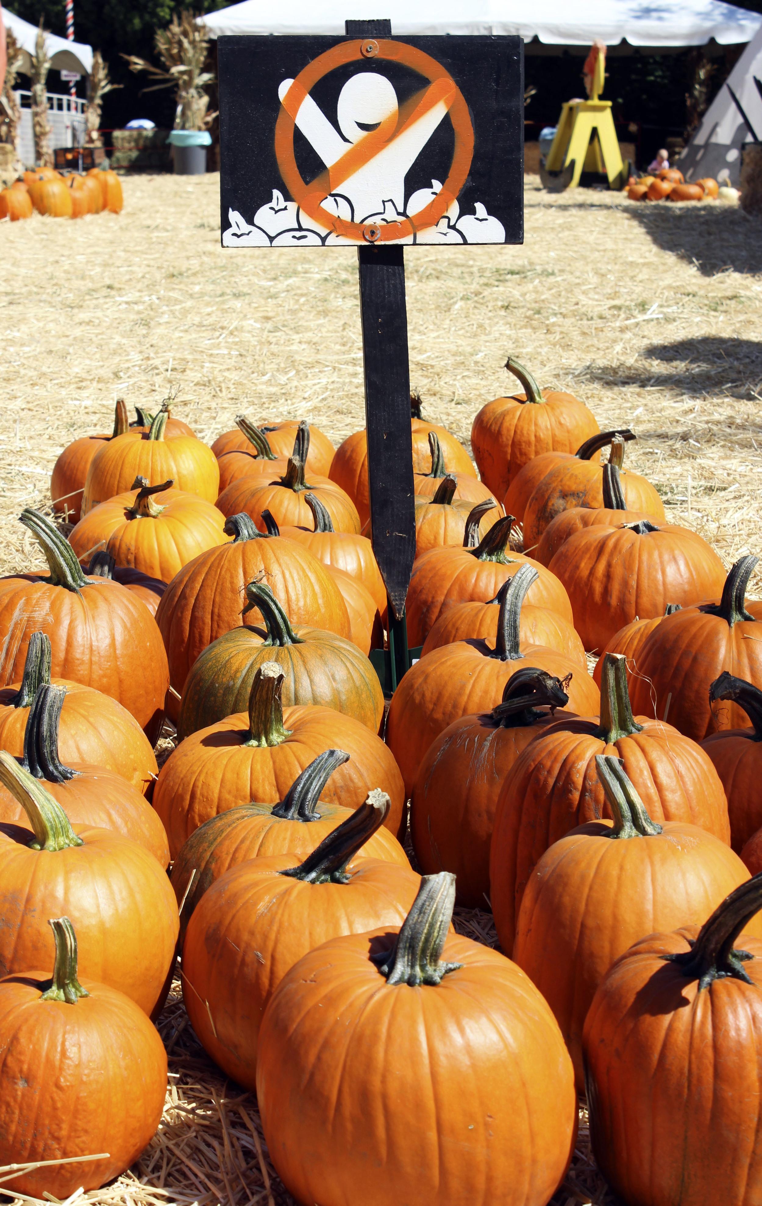 pumpkins cu.jpg