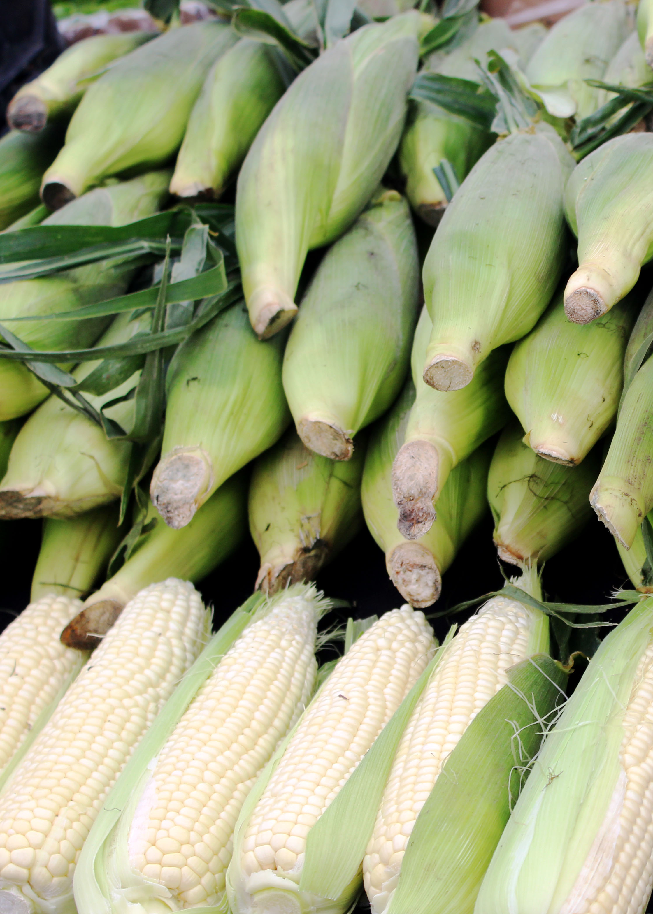 fm corn 9.21.14.jpg