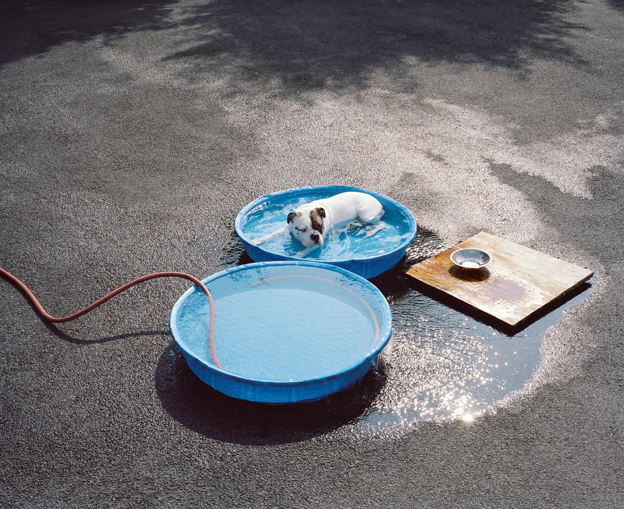 DOG-POOL(drum).jpg