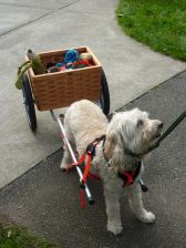 doodle and cart