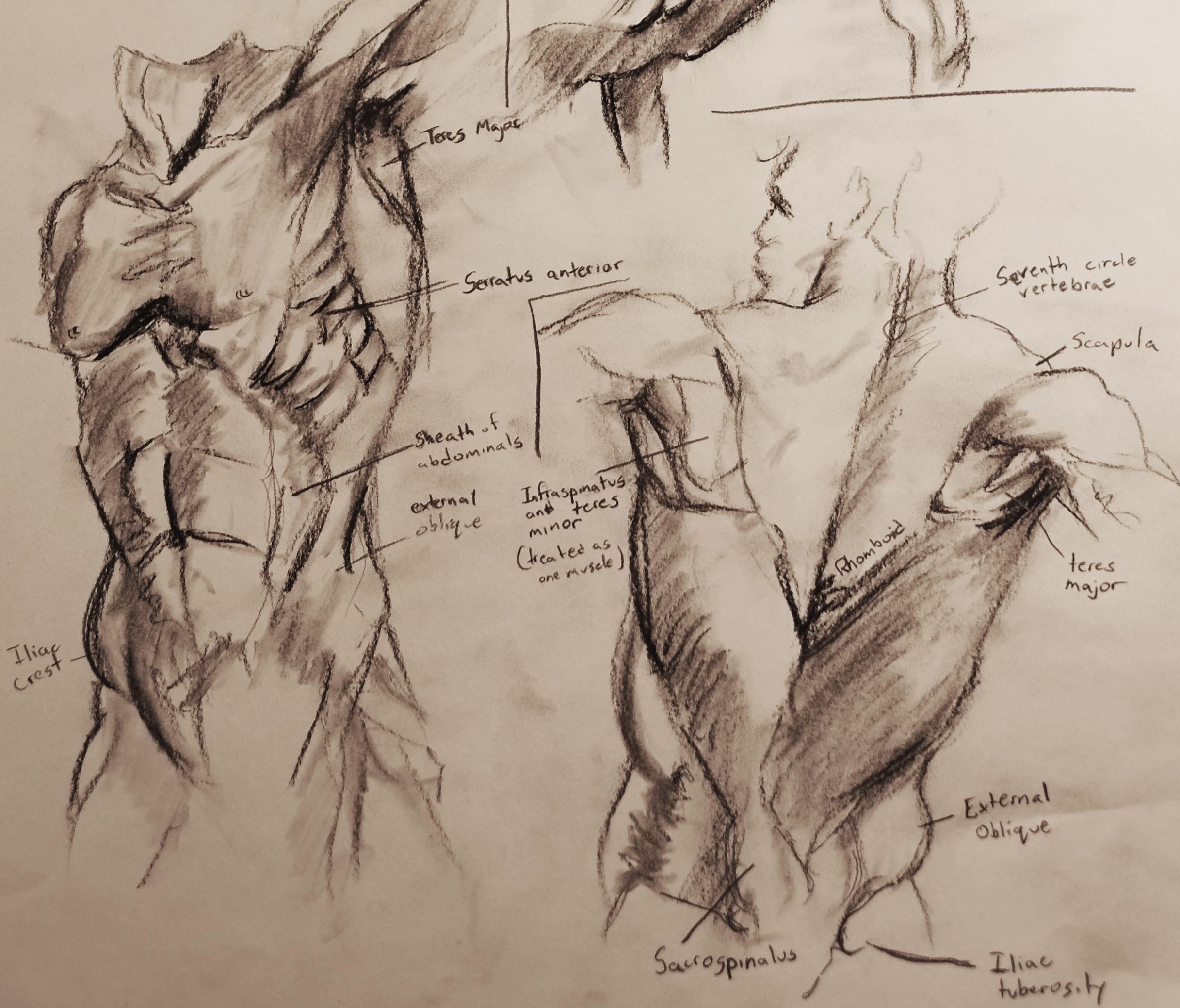 anatomy 1-2.jpg