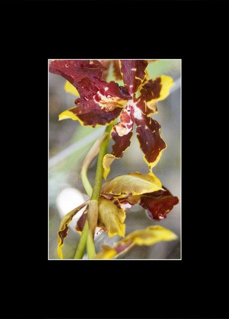 Nha Trang Orchid 2.0.jpg