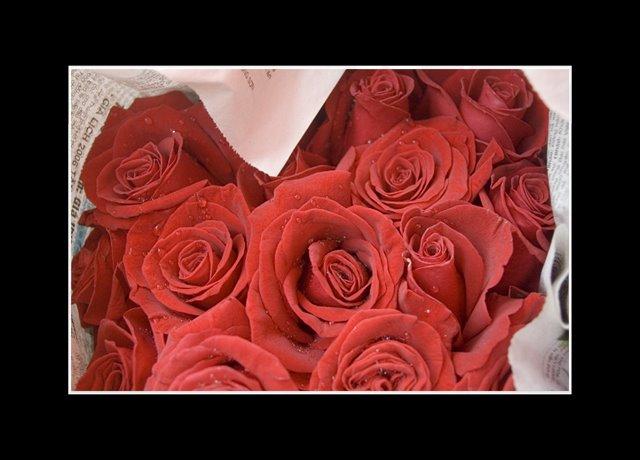 Sapa_Roses.jpg