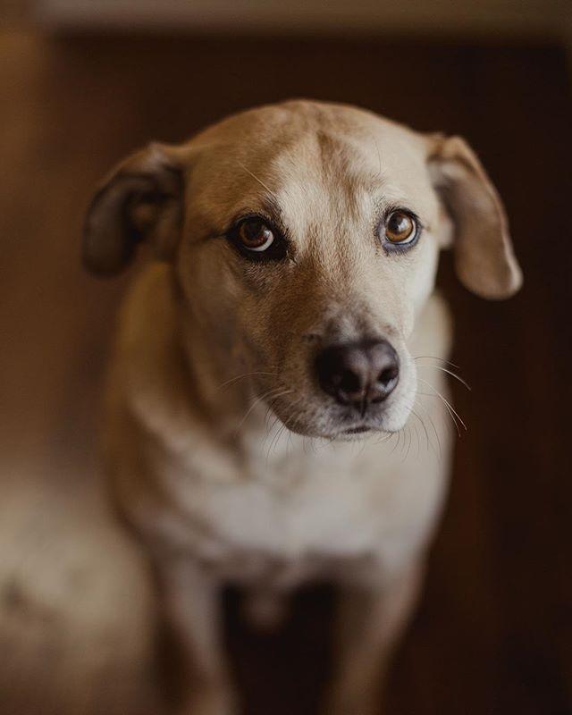 Mondays. Ya know? 🐶🇺🇸 . #thepeoplespup #puppylife #mutt #rescue #seniordog #dogoftheday #puppy #vsco #vscocam #cuddlebuddy #dailyfluff #weeklyfluff #petsofinstagram #dogs_of_instagram #dogsofinstagram #pawcelebrity