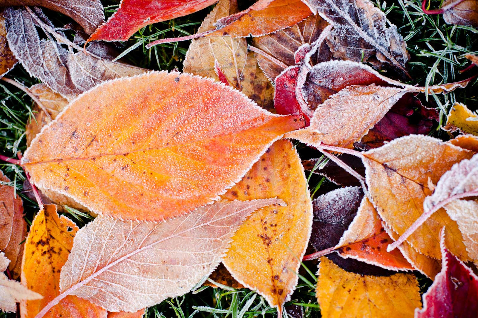 winter-leaves.jpg