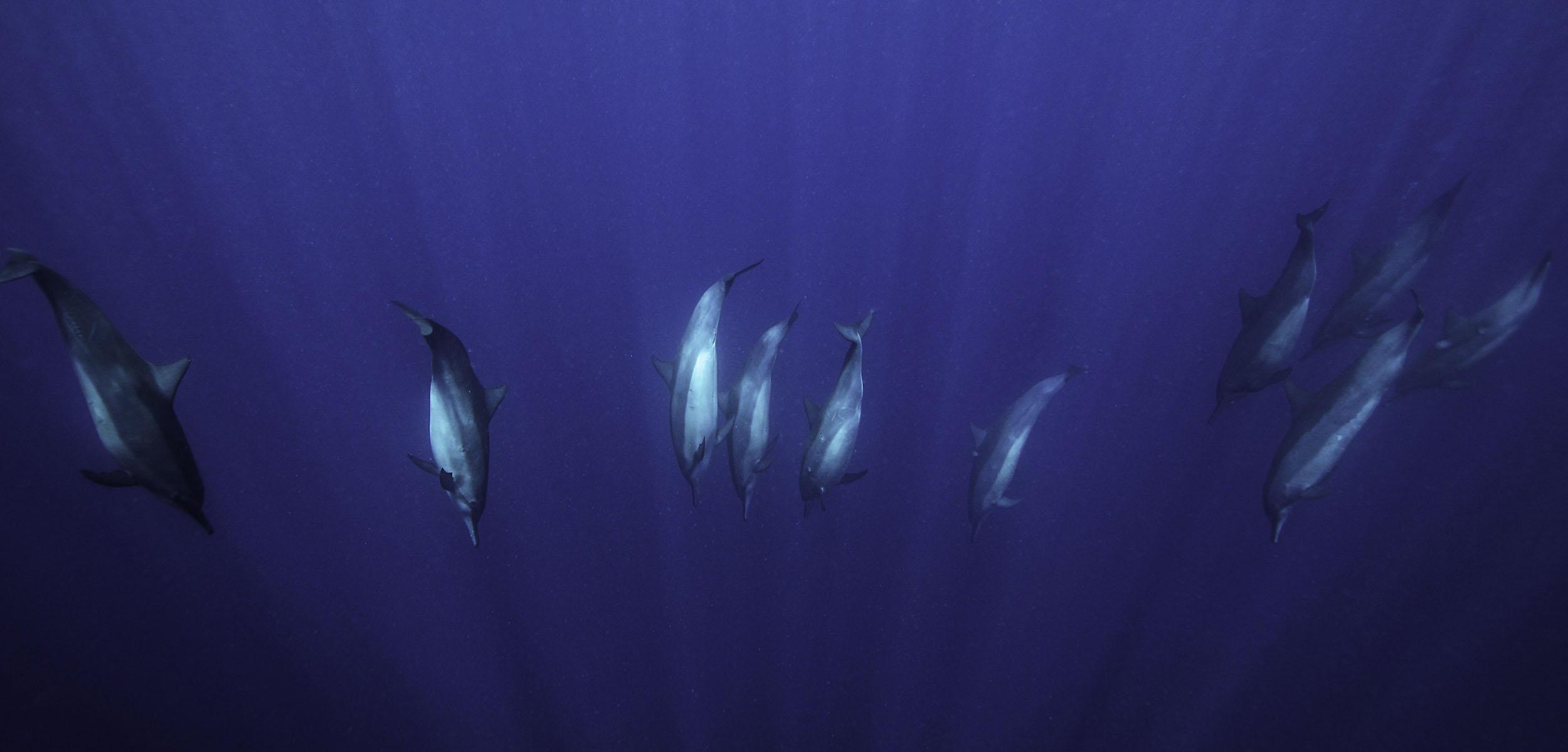 dolphins-great-barrier-reef.jpg
