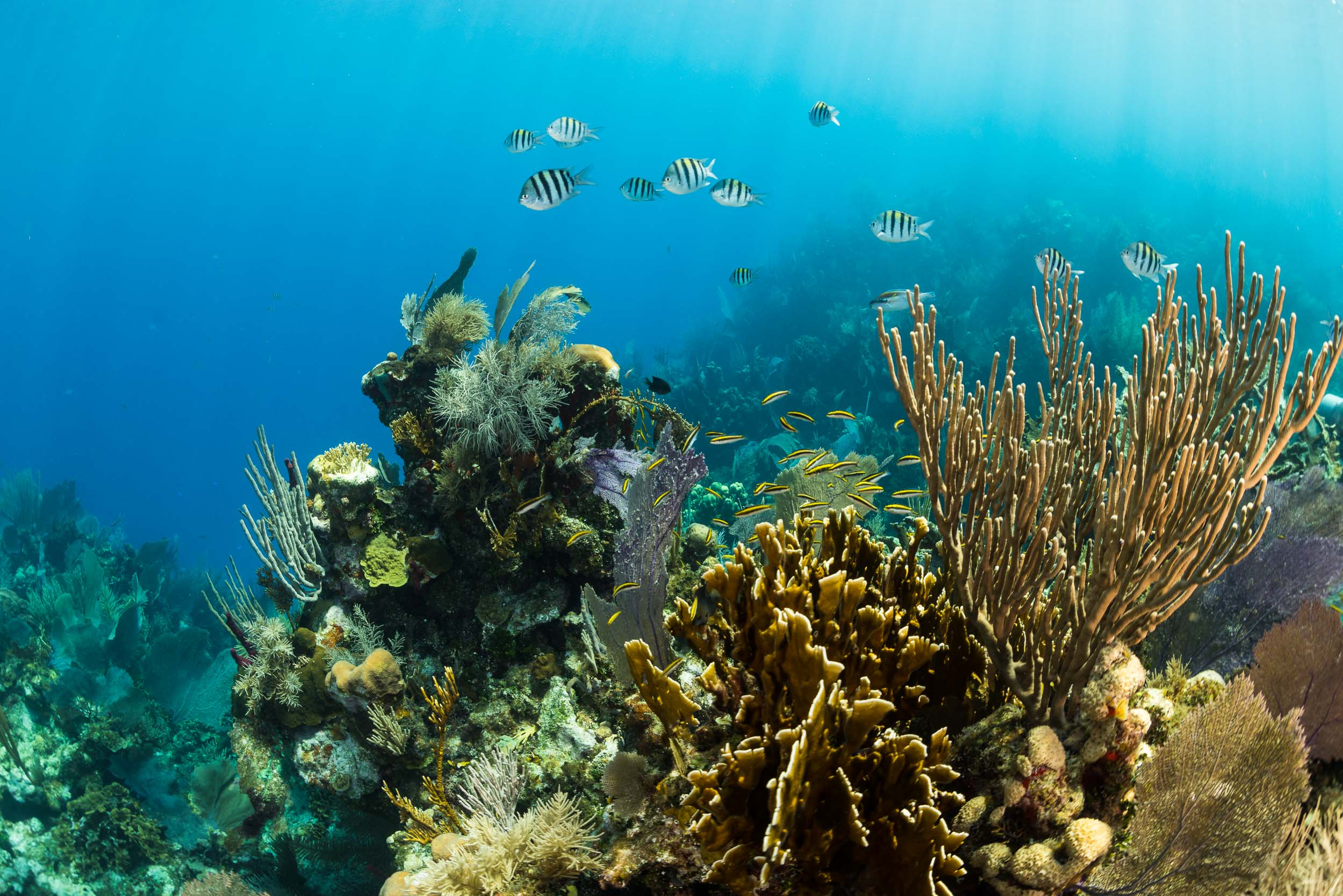 coral-reef-utila-honduras-2.jpg