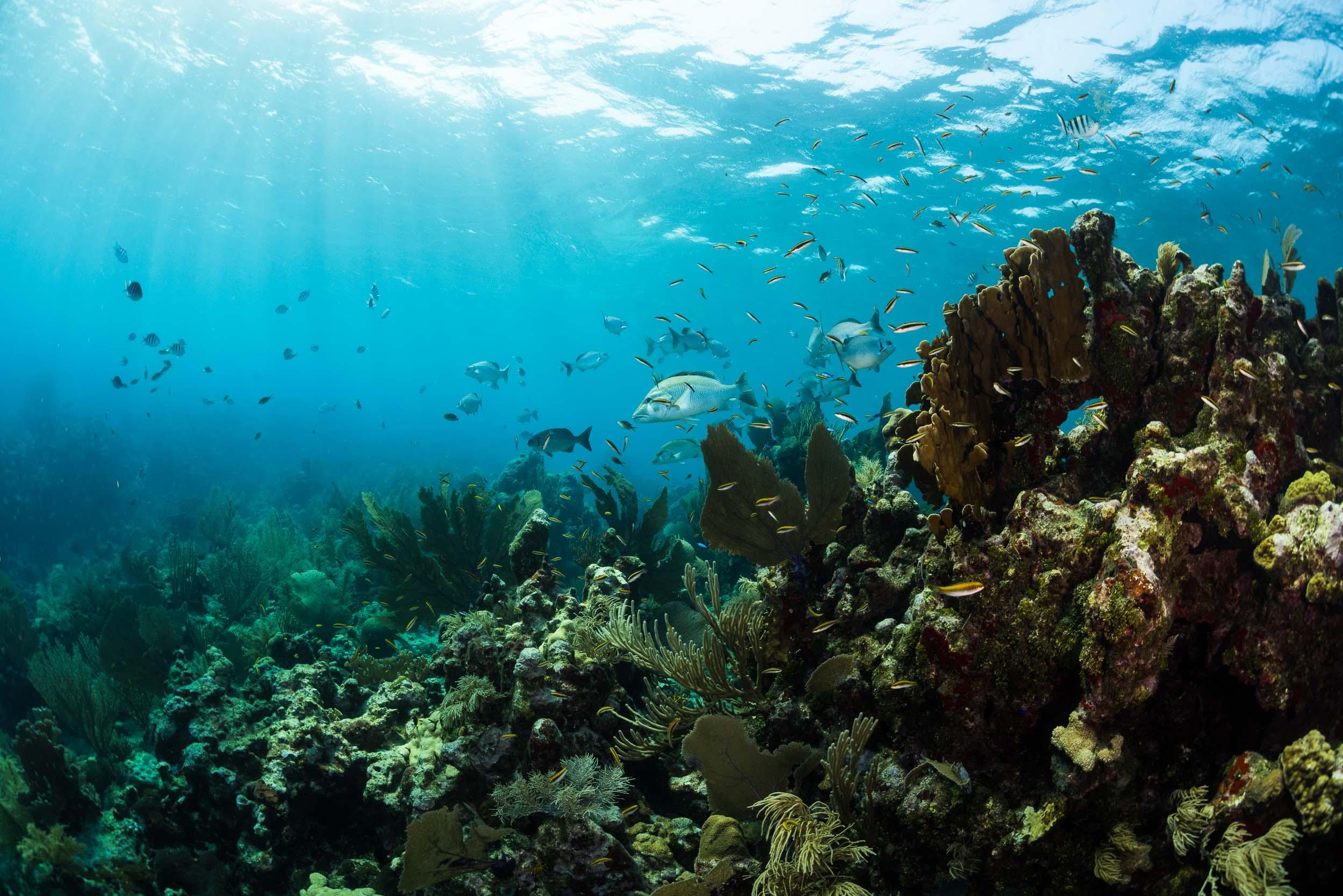 coral-reef-utila-honduras-3.jpg