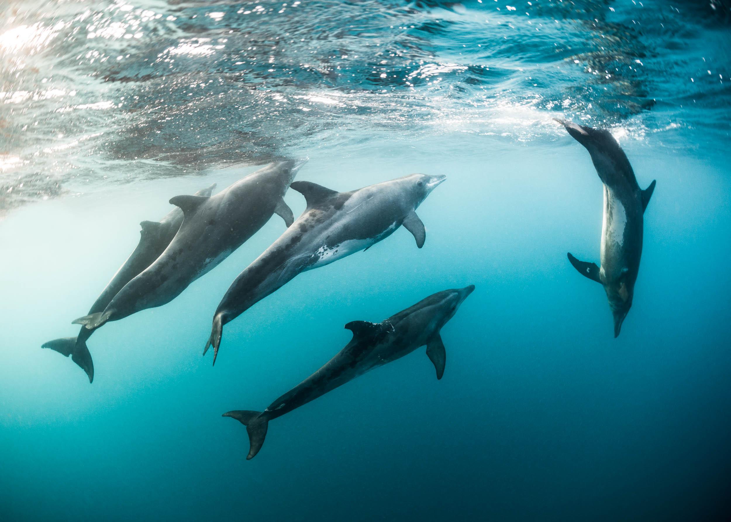 dolphins-utila-honduras-1.jpg