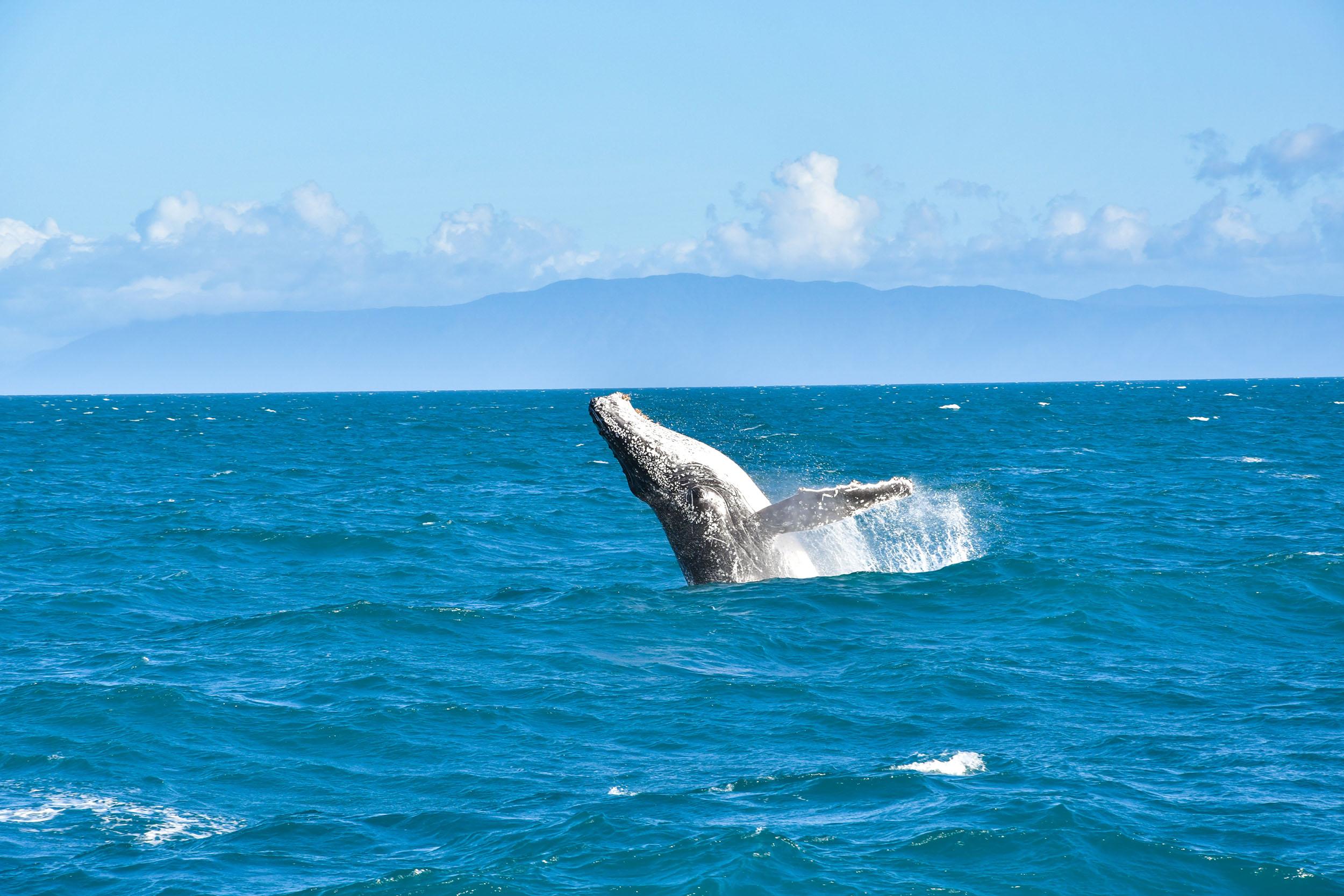 humpback-whale-australia-squarespace.jpg