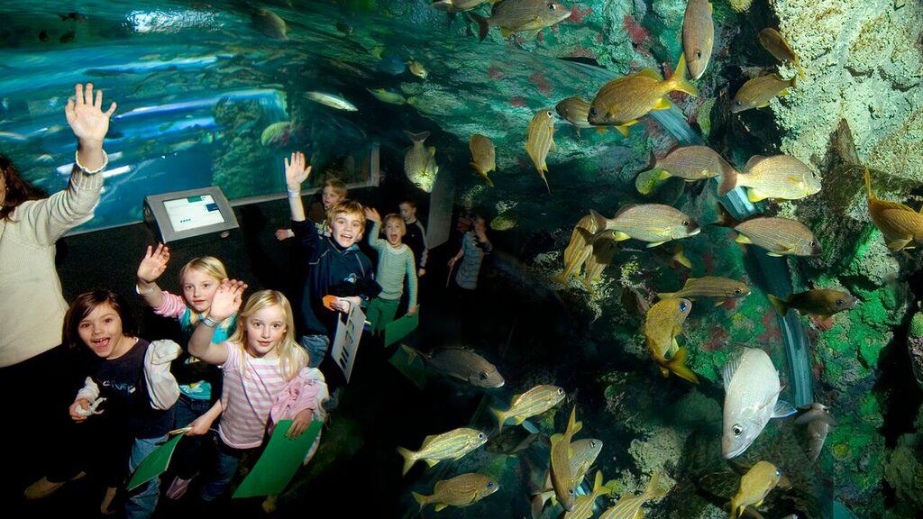 Aquarium Tunnel_preview.jpeg
