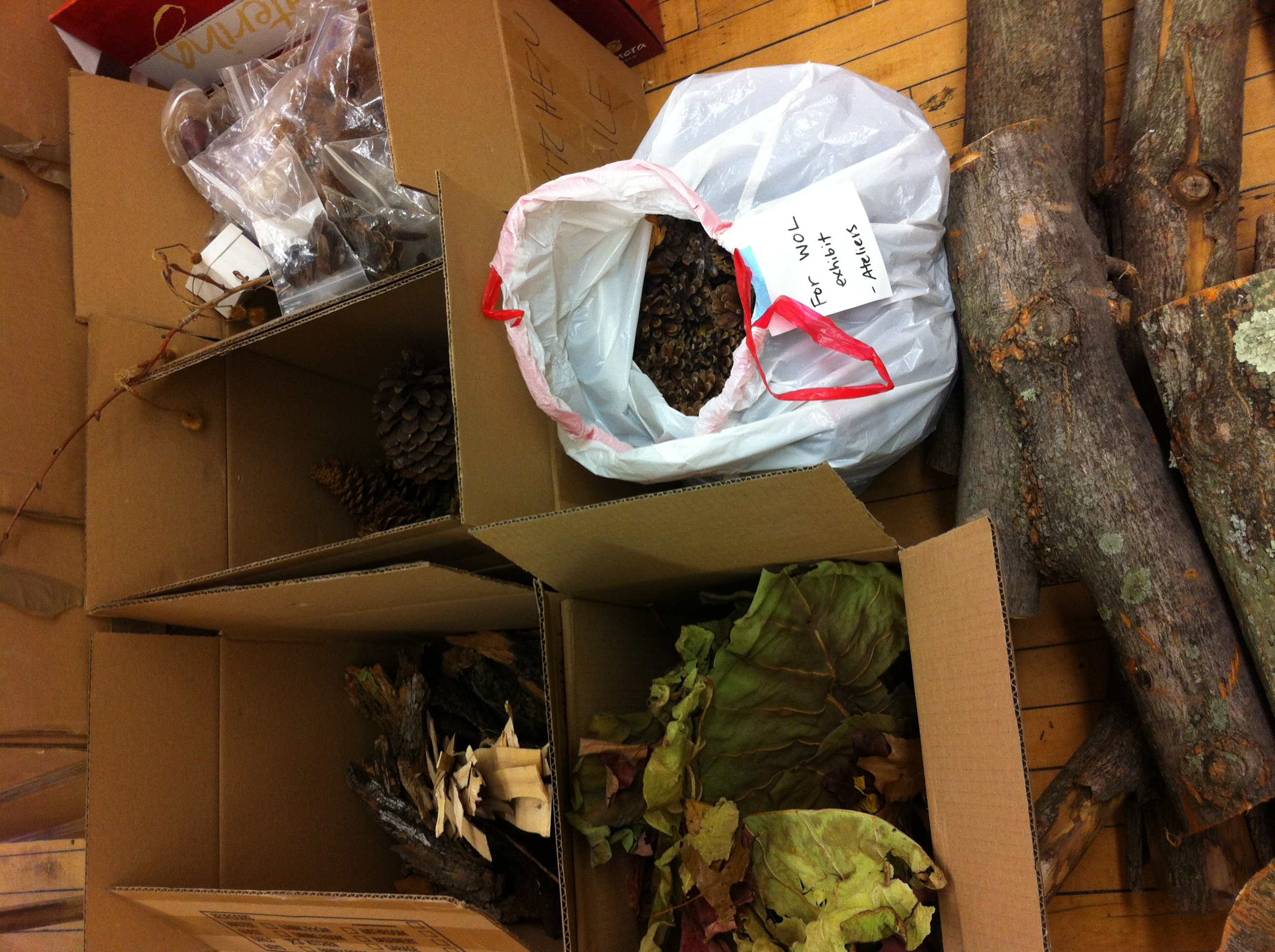 "My BNS/Beginnings Studio colleague Rachel Schwartzman and her daughter Mila sorted a huge selection of natural objects into a pile marked ""WOODLAND ATELIER."" We can't wait to take children and educators to this studio and to see them interact with these beautiful materials, some of which include our very own seed and seed pod collection that dates back up to 20 years (see top right corner)!"
