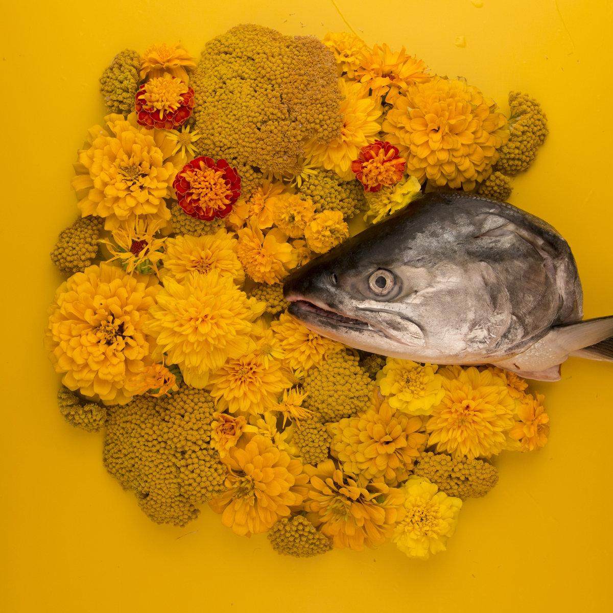 Fish Eyes EP by Haley Heynderickx.jpg