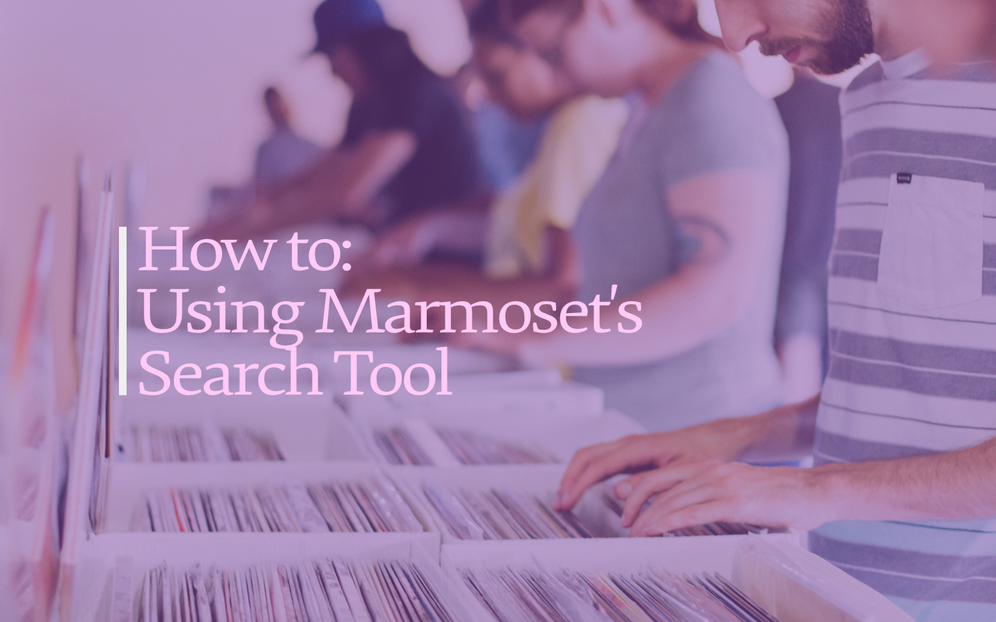 How to use Marmoset Search Tool.jpg