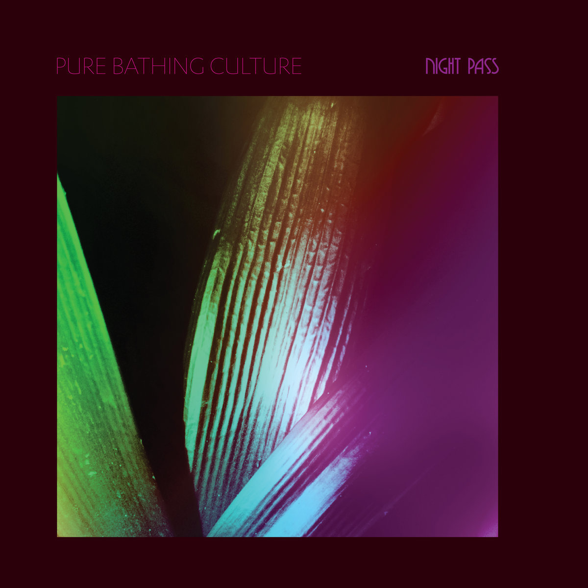 Pure Bathing Culture Night Pass - Album Cover.jpg