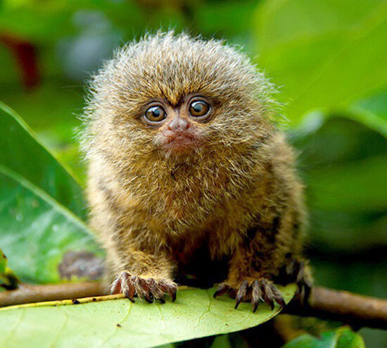 marmoset-music-licensing-song-licensing.jpg