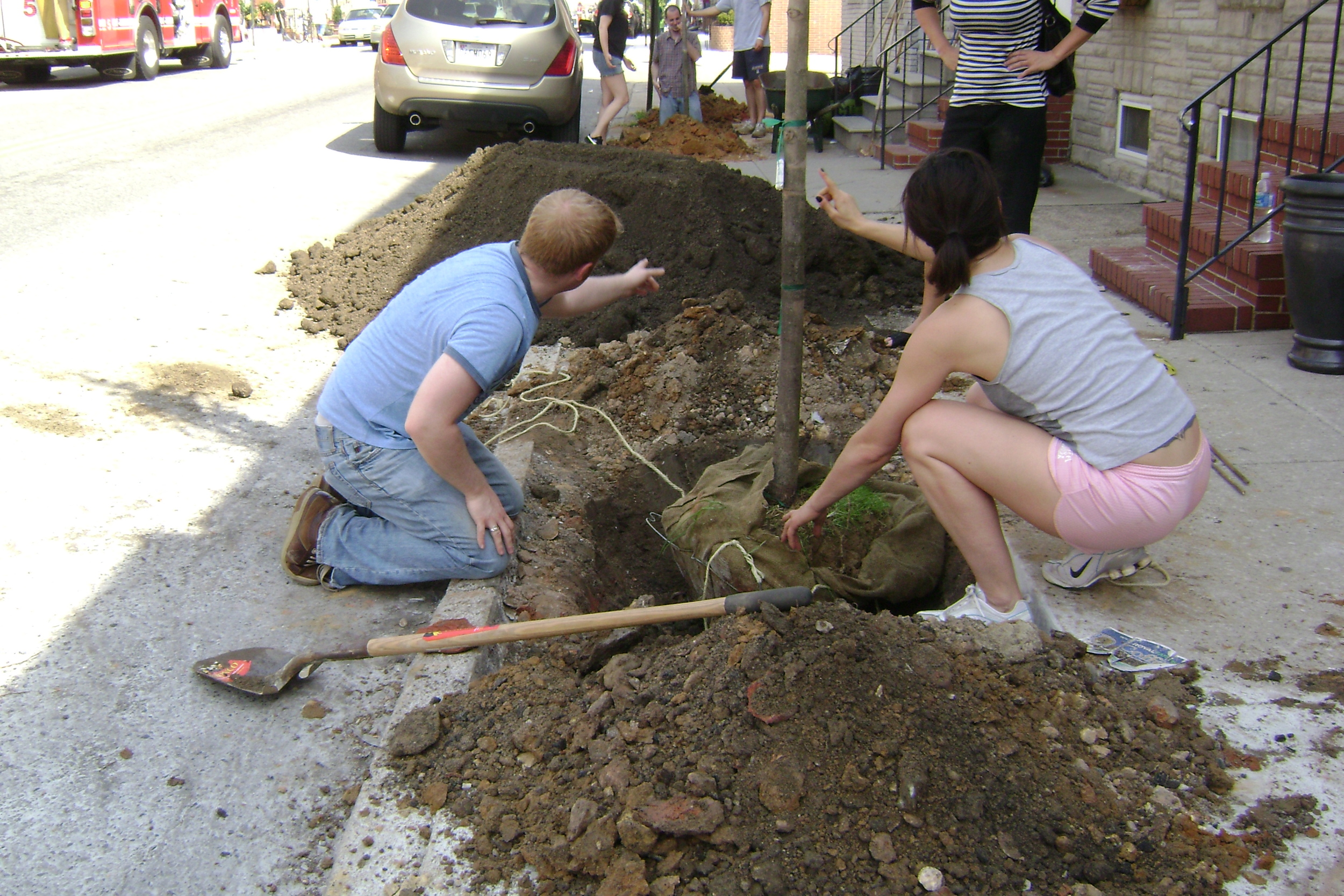 tree-being-planted-on-300-connkling.jpg