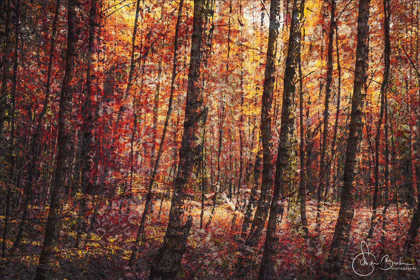 5_Trees_Nizar Bredan.jpg