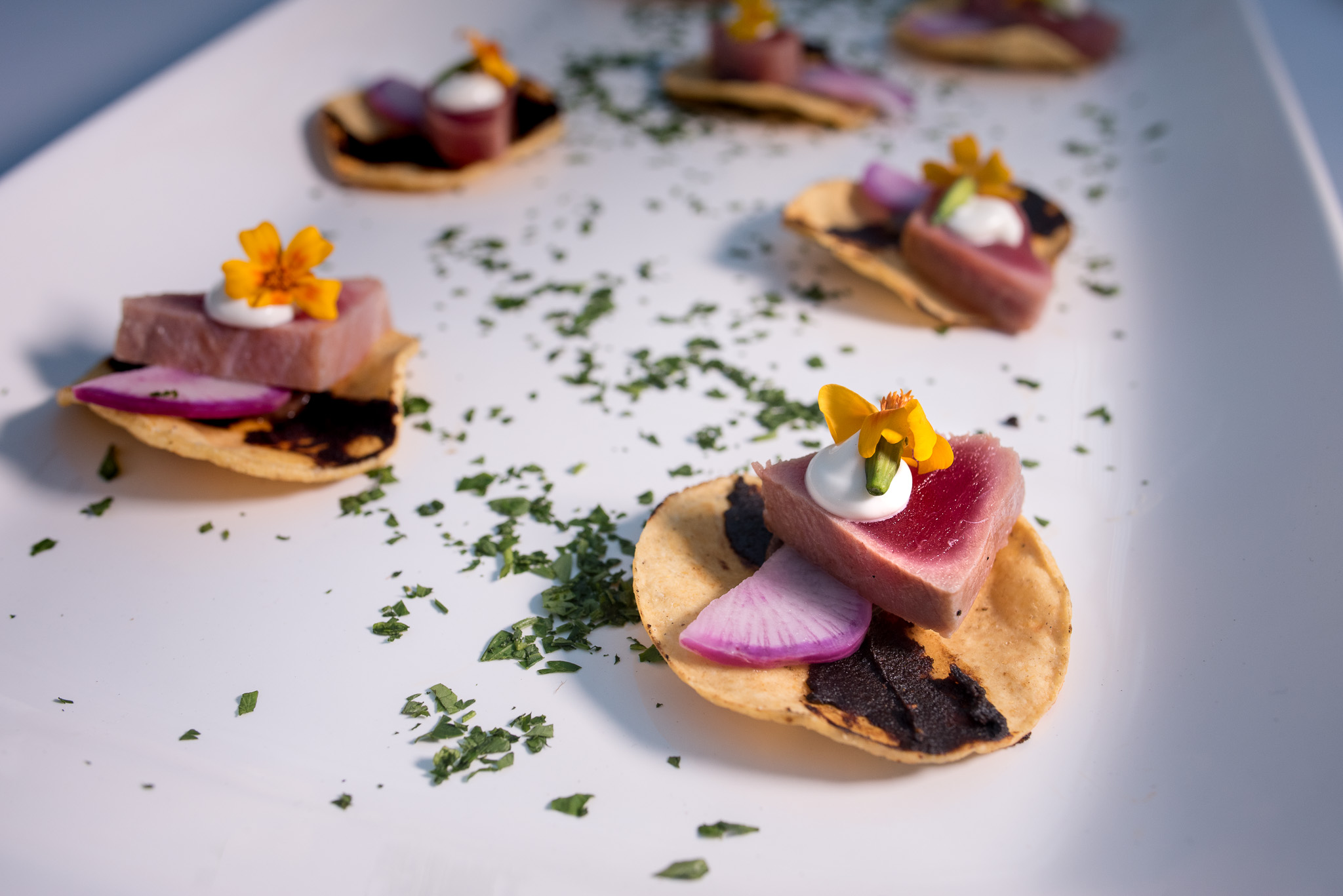 ALBACORE TOSTADA| Seared Albacore, Black Bean, Crema & Microflower, on Tostadita