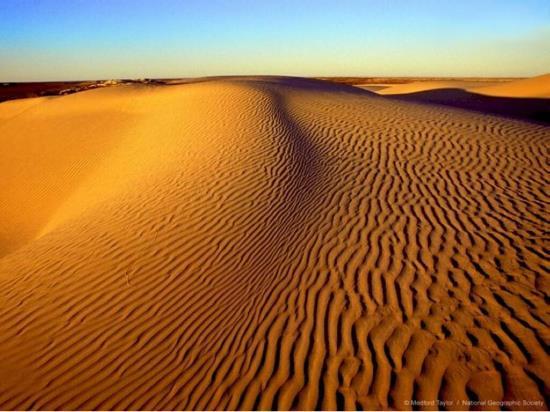 Egyptian-Camel-egypt-1239932_1024_768.jpg
